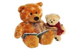 Dois ursos. Fotos de Stock