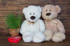 Dois ursos de peluche Imagens de Stock