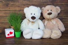 Dois ursos de peluche Fotos de Stock Royalty Free