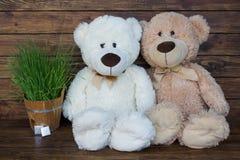 Dois ursos de peluche Imagens de Stock Royalty Free