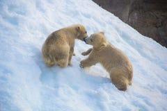 Dois ursos pequenos Fotografia de Stock Royalty Free