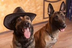 Dois viajantes do cão com no chapéu Foto de Stock Royalty Free
