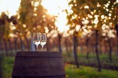 Dois vidros do vinho branco no vinhedo Fotos de Stock Royalty Free