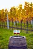 Dois vidros do vinho tinto no vinhedo Imagem de Stock Royalty Free