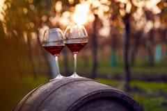 Dois vidros do vinho tinto no vinhedo Fotos de Stock Royalty Free