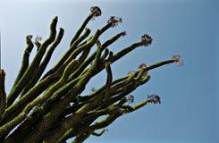 dojechania kaktusowy niebo Zdjęcia Stock