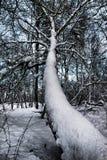 dojechania nieba drzewa zima Obrazy Royalty Free