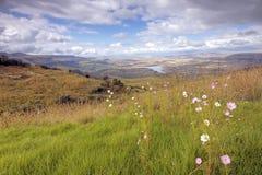 dojna miód dolina Zdjęcie Royalty Free