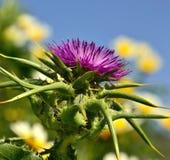 Dojni osety i dzicy kwiaty fotografia stock