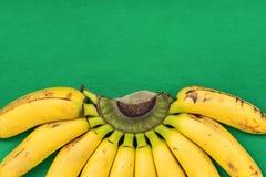 Dojrzała Kolorowa wiązka Gros Michel dziecka banany na gałąź na Wibrującym Zielonym tle Piękny okręgu wzór Semi dieta zdrowa Obrazy Stock