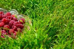 Dojrzała malinka w szklanym naczyniu na zielonej trawie zdjęcia royalty free