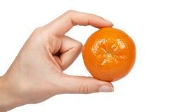 Dojrzała mandarynka, cytrusa tangerine, pomarańcze w ręce pojedynczy białe tło zdjęcia royalty free