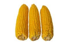 Dojrzałe świeże kukurydzane owoc odizolowywać na białym tle Dla twój fo obrazy royalty free