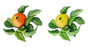 dojrzałe jabłko, Zdjęcie Stock