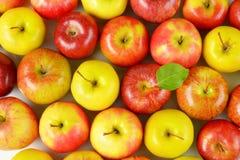 dojrzałe jabłko, Obrazy Royalty Free