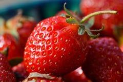 Dojrzałe jagody truskawki zakończenie up Zdjęcie Stock