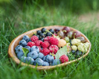 Dojrzałe jagody w drewnianym łęku zdjęcie royalty free