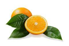 dojrzałe liść zielone pomarańcze Obrazy Royalty Free