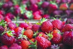 dojrzałe, organicznie, czerwone truskawki w pudełkach, przed transportem konsument fotografia royalty free
