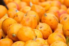 Dojrzałe owoc loquat Eriobotrya japonica Niesplika tło fotografia royalty free
