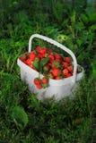 Dojrzałe słodkie truskawki w plastikowym koszu na a Zdjęcie Royalty Free