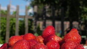 Dojrzałe truskawki na talerzu na lecie uprawiają ogródek tło Zbliżenie czerwieni truskawki zbiory wideo