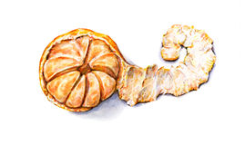 Dojrzałej akwareli obrany tangerine handwork owoce tropikalne zdrowa żywność Obrazy Royalty Free