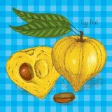 Dojrzały Żółty Canistel lub Eggfruit ilustracja wektor