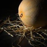 Dojrzały żółty melon na ciemnym tle sztuki pięknej kamery oczu mody pełne splendoru zieleni klucza wargi target1847_0_ depresję r Obraz Royalty Free