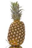 Dojrzały ananas Zdjęcia Stock