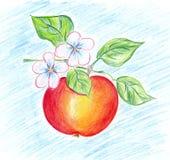 Dojrzały jabłko Zdjęcie Stock