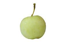 Dojrzały jabłko jeden Fotografia Stock