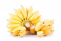 Dojrzały jajeczny banan i ręka złoci banany na białego tła Pisang Mas zdrowym Bananowym owocowym jedzeniu odizolowywającym Zdjęcia Royalty Free