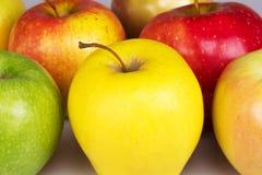 Dojrzały kolor żółty, czerwień, zieleń, różowy jabłko Obrazy Stock