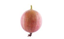 Dojrzały, smakowity i lekki, - różowy agrest Dojrzały, soczysty, surowy, świeży, smakowity, zdrowy, odżywczy pojęcie, Jagody dla  Fotografia Royalty Free