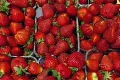 Dojrzały soczysty truskawki zbliżenie Wielki tło dla etykietka dżemu, jagodowy dżem, truskawkowy sok, wino owocowe zdjęcia stock