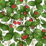Dojrzały truskawkowy bielu wzór ilustracja wektor