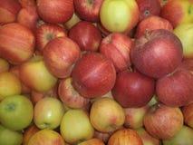 Dojrzałych jabłko rodzajów królewski hala fotografia stock
