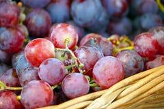 dojrzałych winogron, Obraz Royalty Free