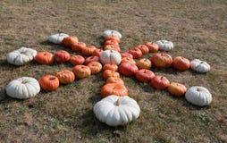Dojrzałe jesieni banie na gospodarstwie rolnym Zdjęcie Stock
