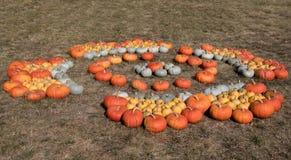 Dojrzałe jesieni banie na gospodarstwie rolnym Fotografia Royalty Free