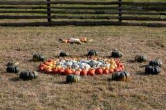 Dojrzałe jesieni banie na gospodarstwie rolnym Fotografia Stock