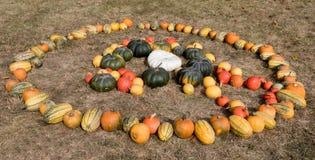 Dojrzałe jesieni banie na gospodarstwie rolnym Obrazy Stock