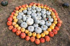 Dojrzałe jesieni banie na gospodarstwie rolnym Obraz Stock