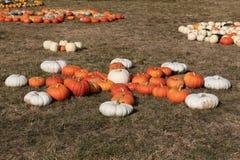 Dojrzałe jesieni banie na gospodarstwie rolnym Zdjęcia Stock