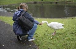 Dojrzała kobieta karmi kaczki Zdjęcia Stock