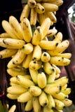 Dojrzały banan. kluay Khai lub Filigranowy banan, Jeden banan Jakby Fotografia Stock