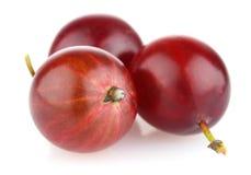 Dojrzały czerwony agrest Fotografia Royalty Free