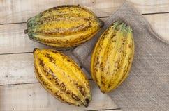 Dojrzały kakao Fotografia Royalty Free