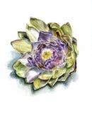 Dojrzały karczocha kwiatu przód Zdjęcie Royalty Free